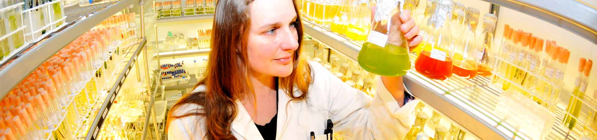 Image of a female scientists with flasks in our algal culture collection