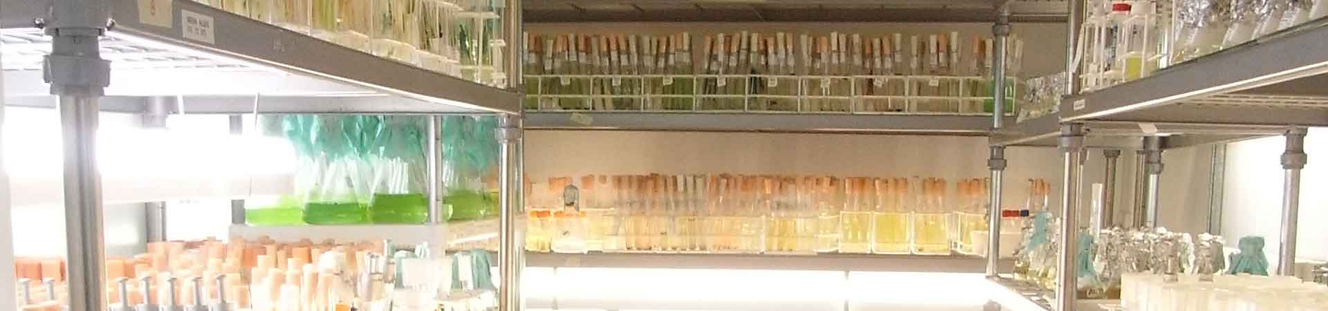 Picture from inside one of the walk-in fridges containing microalgae cultures