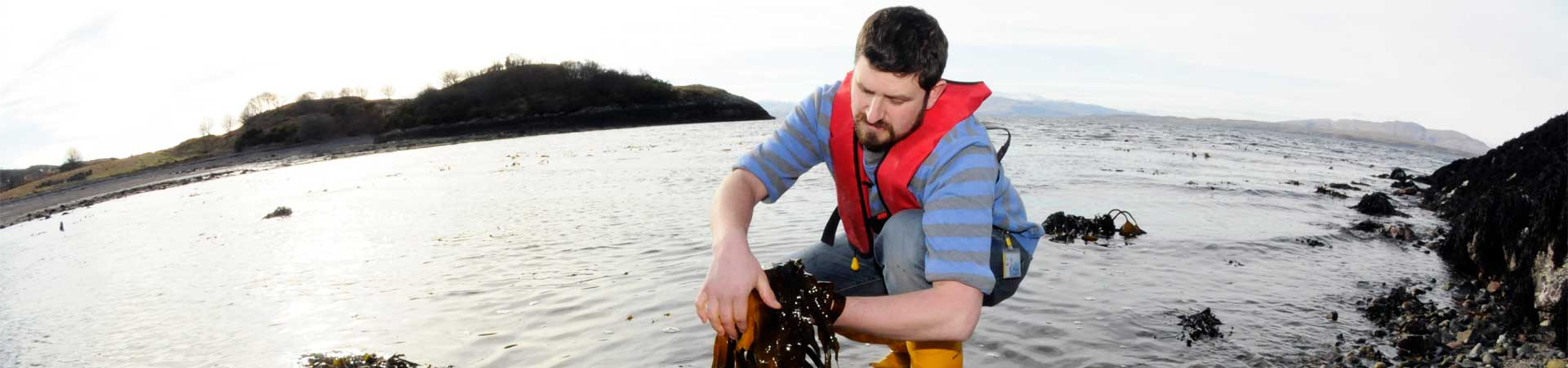 Coastal ecologist sampling seaweed