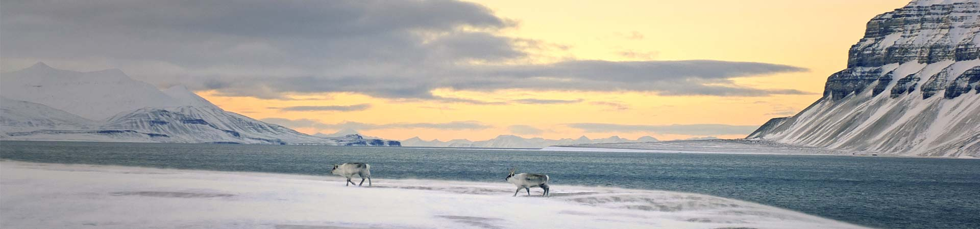 Image showing reindeer on an Arctic fjord