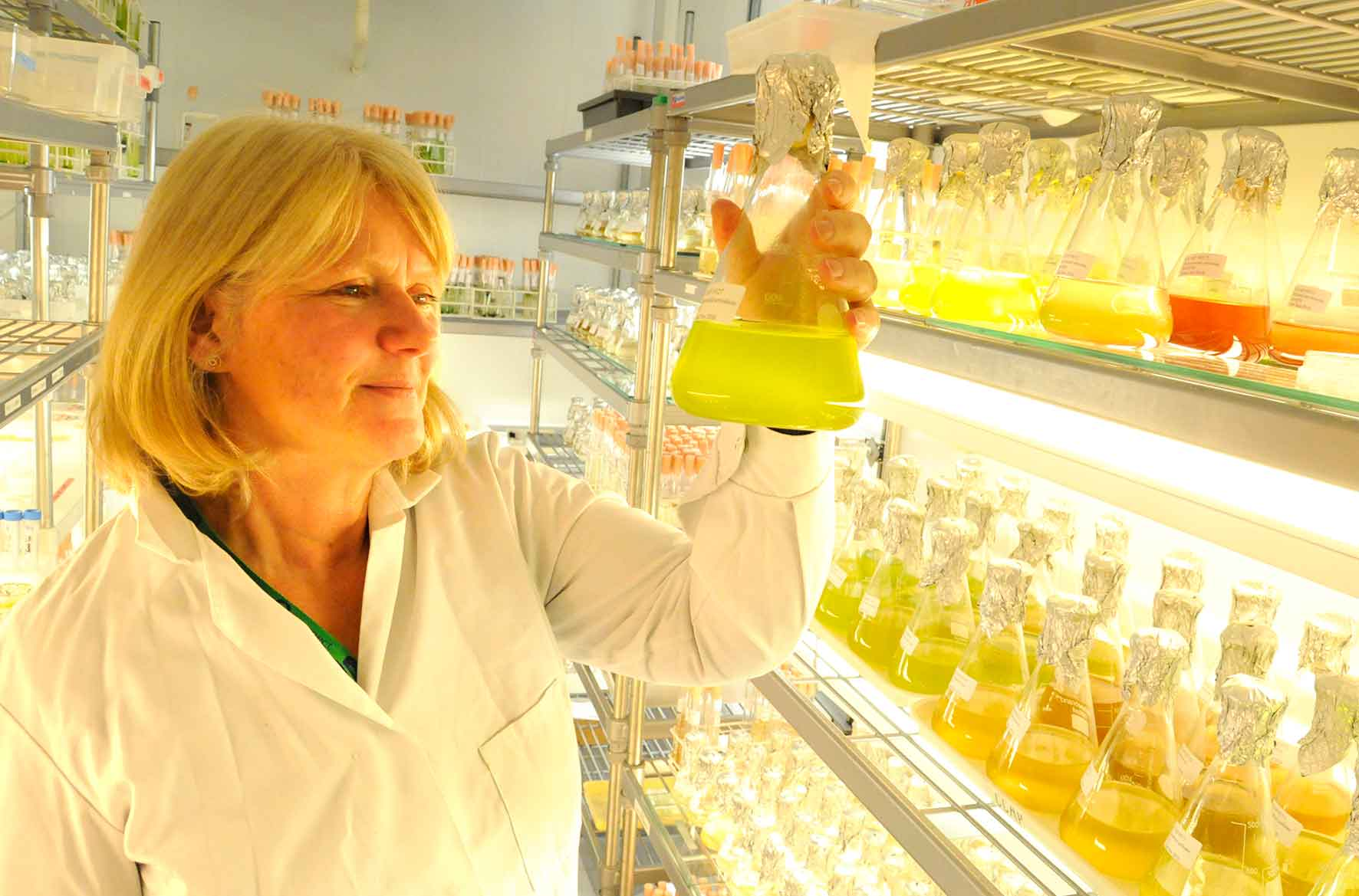 Christine Campbell MBE has been recognised for her contribution to the Culture Collection of Algae and Protozoa.