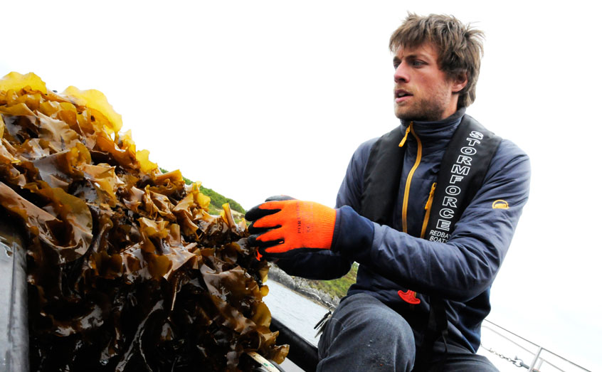 Dr Adrian MacLeod of SAMS is carrying out research in seaweed cultivation