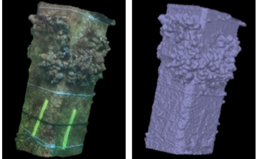 3D photogrammetry of mussels on a concrete leg